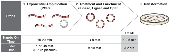 Figure 1: Site-specific mutagenesis proceeds in less than 2 hours.