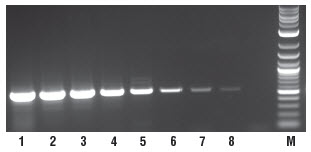 Figure 2. Sensitive detection of RNA down to 1 pg.