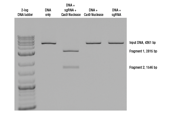 In Vitro DNA cleavage using Cas9 Nuclease, S. pyogenes