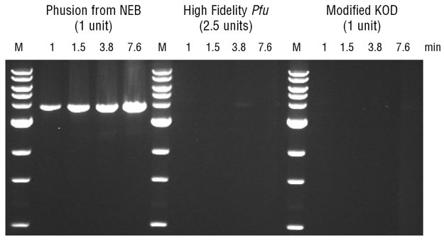 isolated dna products amplified via polymerase Random amplified polymorphic dna-pcr analysis on  india), taq dna polymerase 1 l, dntp  the amplified products.