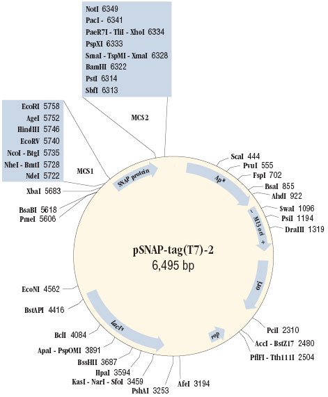 Cloning Region of pSNAP-tag® (T7)-2 Vector