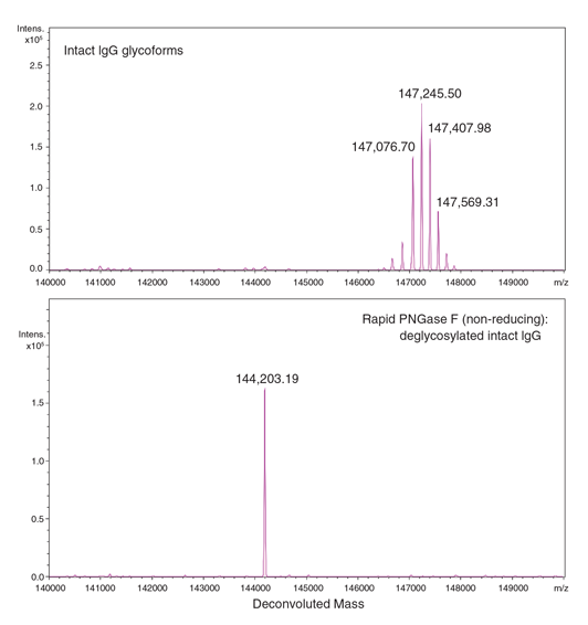 ESI-TOF analysis of an antibody before and after treatment with Rapid PNGase F (non-reducing format).