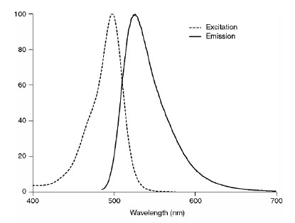 Figure 2:  Excitation (dotted line) and emission spectra after coupling of SNAP-Cell Oregon Green to SNAP-tag in buffer at pH 7.5.
