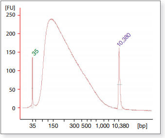 Figure 1: Relative size distribution of Fragmented End Repaired DNA as seen using the Bioanalyzer® 2100 (Agilent Technologies, Inc.).