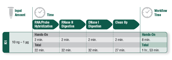 Figure 3. NEBNext rRNA Depletion Kit Workflow Times
