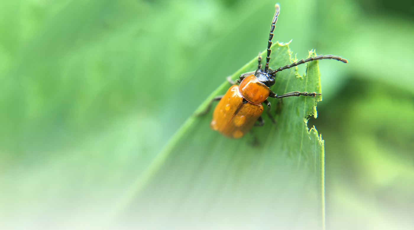 EndoExo_bug_700x390