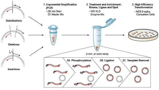 Q5 Site-Directed Mutagenesis Kit Overview