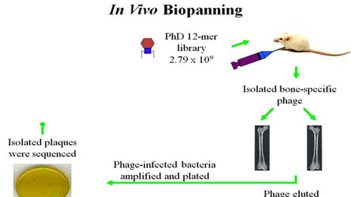 PhD_Video_thumb