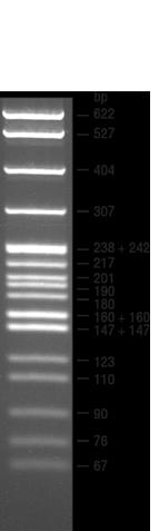 DNA梯子的图像结果
