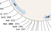 DNA_Plasmids_Maps_thumb