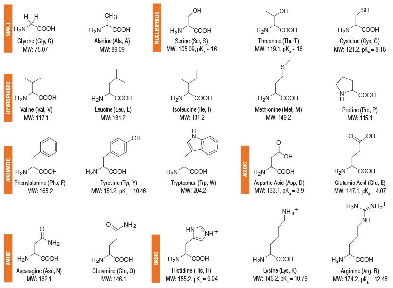 Amino acid i