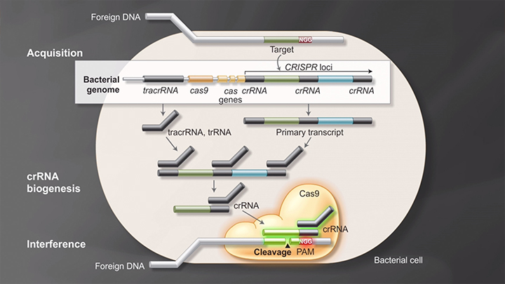 crispr_cas9_animation_282x210_thumb