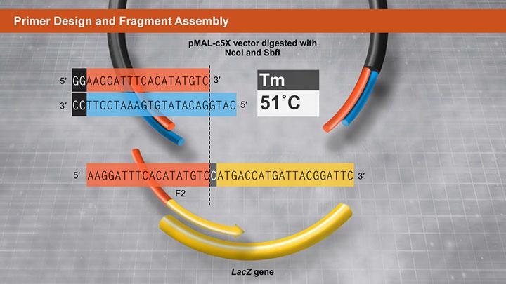 PrimerDesignFragmentAssembly_720