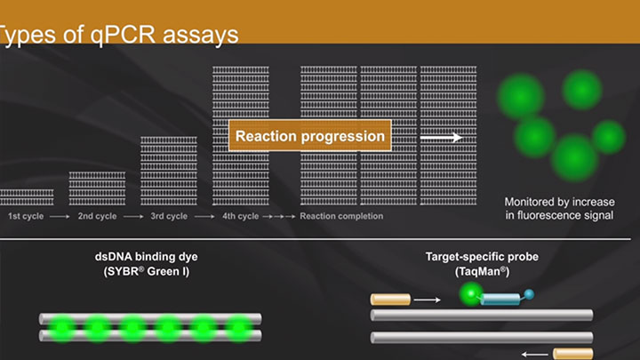 overview of qPCR