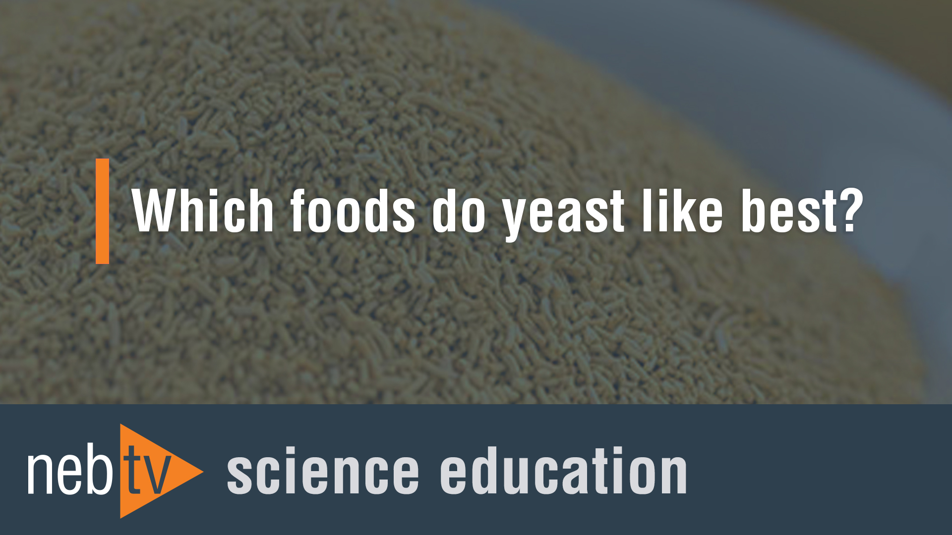 NEBTV_SciEdu_Yeast_1920